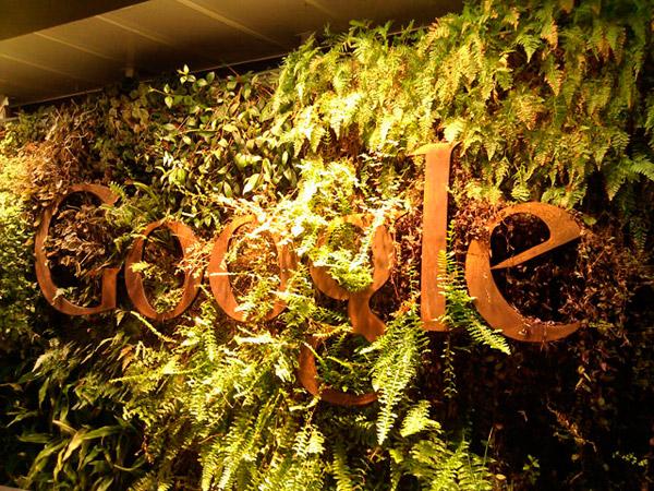 Стена из растений в приемно офиса Google Сидней.
